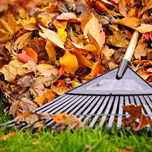 Raking Leaves Near Your Home