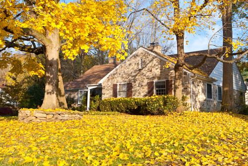 What to Know about Fall Leaves and Your Home