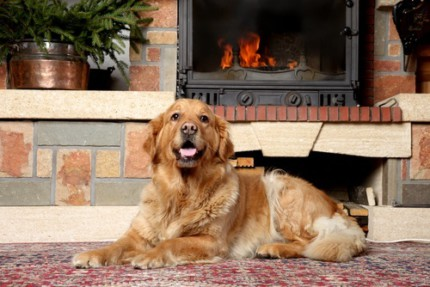 How to Sell Your Mountains Edge Home When You Have Pets