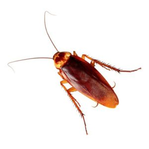Pest Control Basics for Home Owners