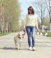 Is Your Neighborhood in Boca Raton Florida Dog Friendly?