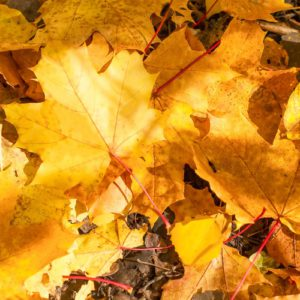 Selling Your Orchard Park Home in the Fall