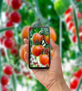 Best Garden Apps for Your Home in South Chandler