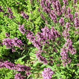 your home herb garden